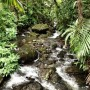 Trekking through El Yunque Rainforest
