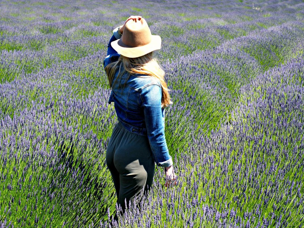 lavender field, Washington, Friday harbor, San Juan islands