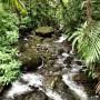 Trekking through El Yunque Rainforest